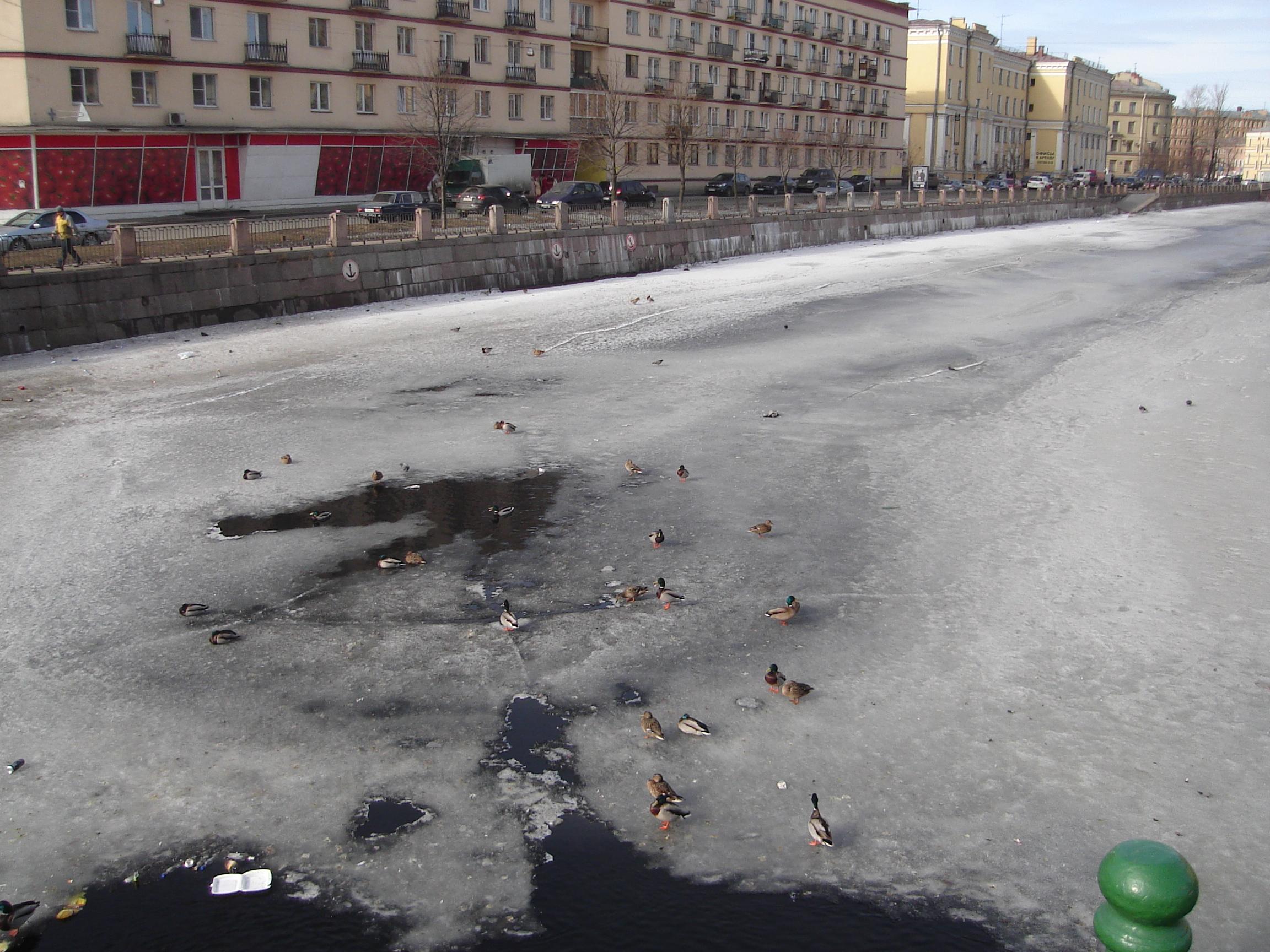 St Petersburg canal & ducks